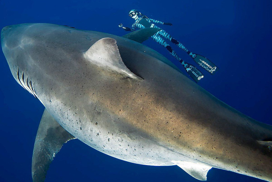 Swimming with Deep Blue – the mother of all whites