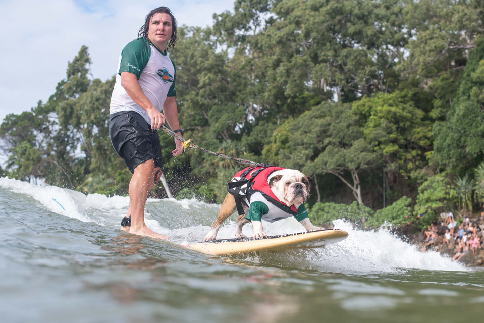 Image 1 for Surfing Dog Days are bark at the Noosa Festival of Surfing