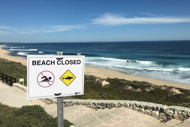 Image 1 for Two shark attacks on surfers at Gracetown in WA's South West - believed to be the same great white