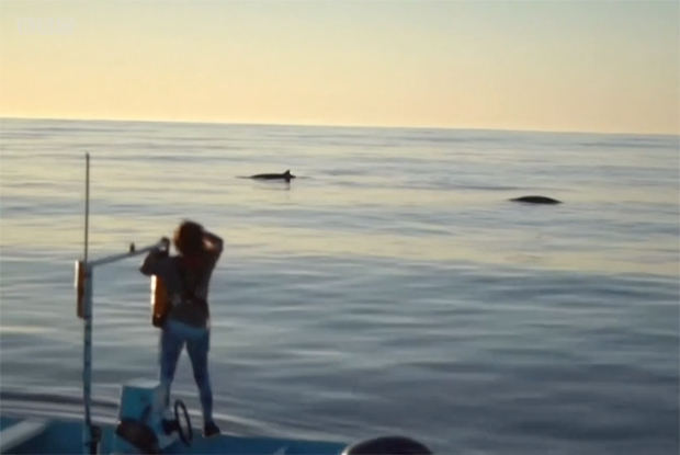 Image 1 for 'New' whale species seen off Mexican coast