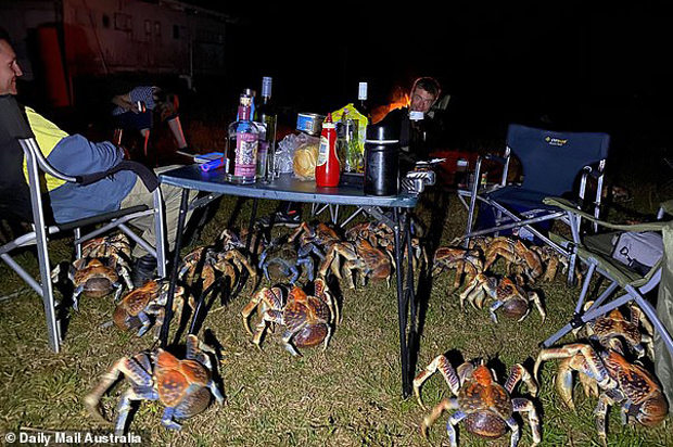 Image 1 for When crabs invade