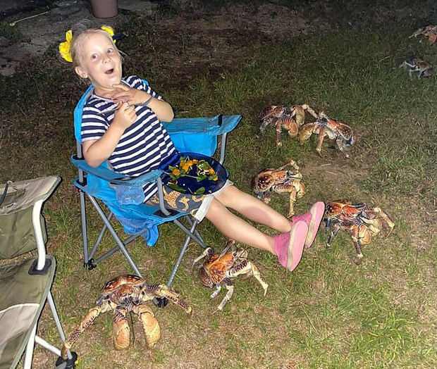 Image 2 for When crabs invade