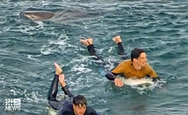 Image 1 for French surfer punches shark during Bells Beach attack – VIDEO