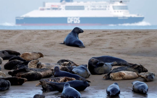 Image 2 for A good news story! Seals stage a comeback on France's northern coast