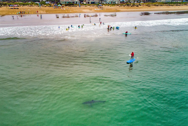 Image 1 for The young great white sharks next door