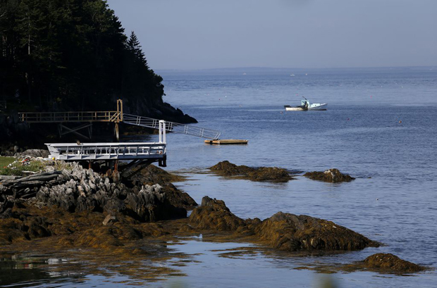 Image 1 for Woman from New York City killed by shark off Maine