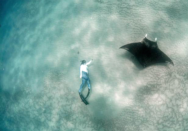"""Image 1 for Big manta rays """"right under noses"""" off busy Florida"""