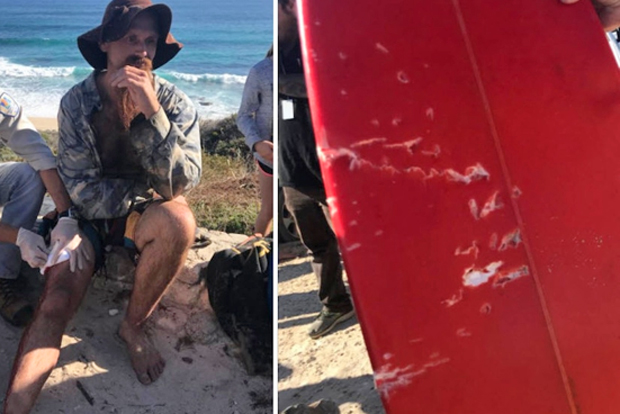 Image 3 for Two shark attacks on surfers at Gracetown in WA's South West - believed to be the same great white