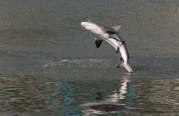 Image 1 for Shark slaps surfer and leaves her with a black eye