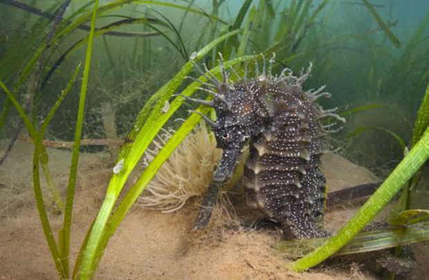 Image 1 for A good news story! One million 'Wonder Plant' seedlings planted in Wales to create healthy seas