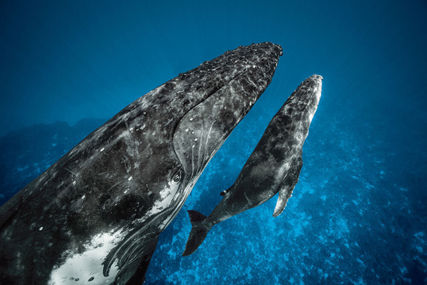 Image 1 for A deep dive into the hidden world of whale culture